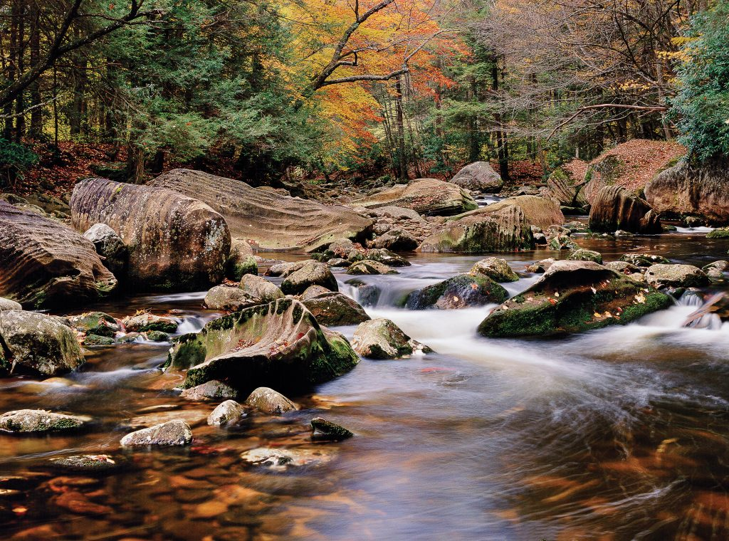 Monongahela National Forest: Otter Creek Wilderness