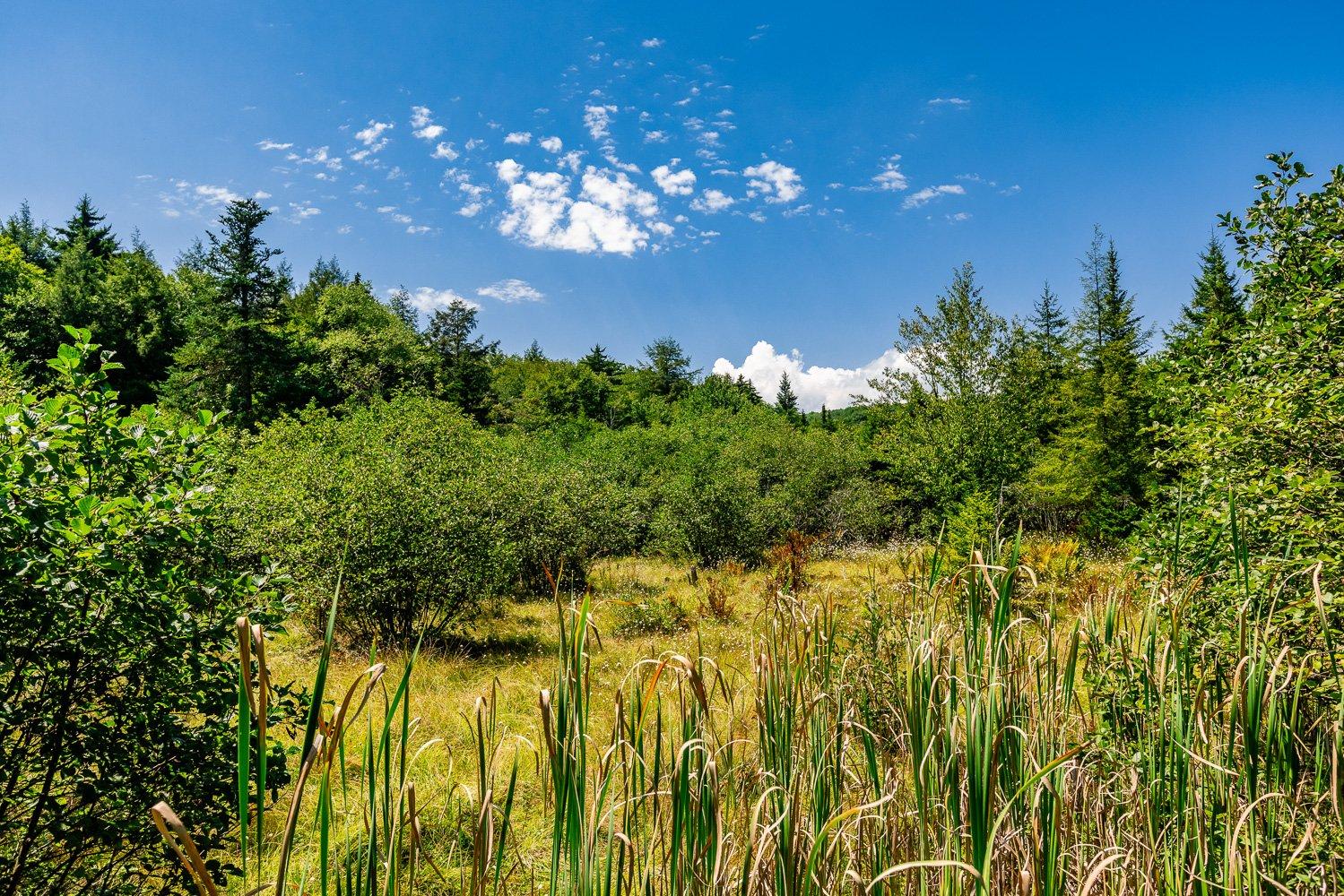 WV Natural Areas: Canaan Valley Wetland