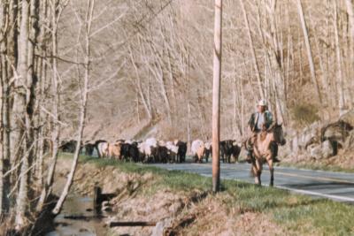 Highland County, Virginia, cattle, farm, farming, horse, horses, living, history, culture