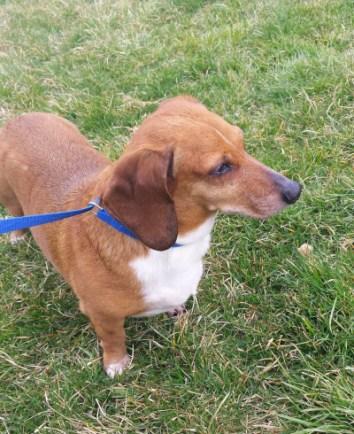 Highland County, Virginia, Monterey, dog, dogs, love, family, man's best friend