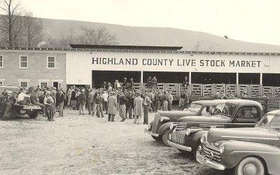 Monterey Livestock: A Highland Icon Reawakened