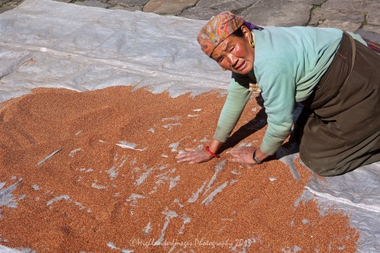 Drying chilli seeds in the sun between Phakding and Lukla.
