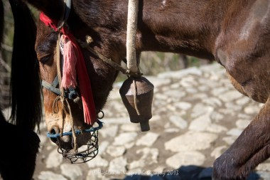 Donkey with bell between Phakding and Lukla.
