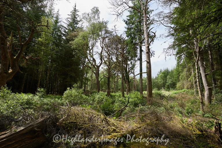Killoughtree, Galloway Forest Park