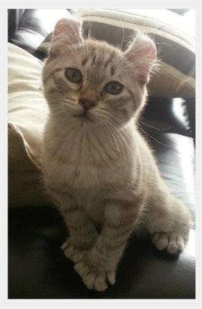 phibie chaton el et spita 11 juin 4