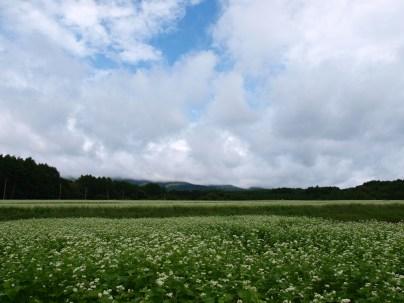 曇り空の蕎麦畑4