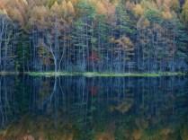 落葉松の黄葉と御射鹿池20141025_4