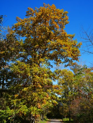 秋色の野辺山2