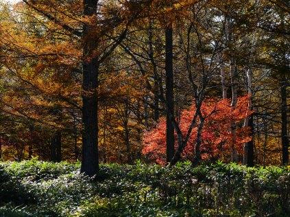 ふるさとの森