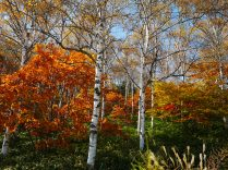 autumn color 8
