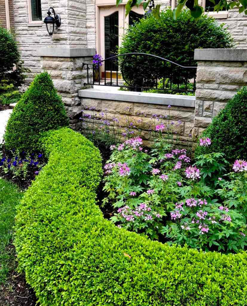 trimmed shrubs surround beautiful flowers at the front gate of a property