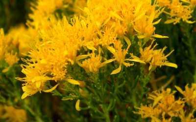 2016 Grow Native Plant Sale!