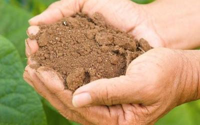 Forest Underground: Soil and its Inhabitants