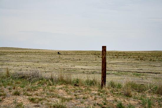 Birding Pawnee National Grasslands Colorado