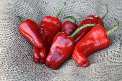 What Chimayo Chile Peppers look like.