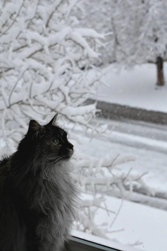cat watching snow