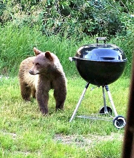 Bear sighting at Glen Eden Resort near Steamboat Springs.