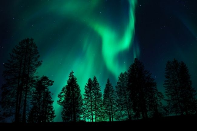 green aurora dancing over boreal forest