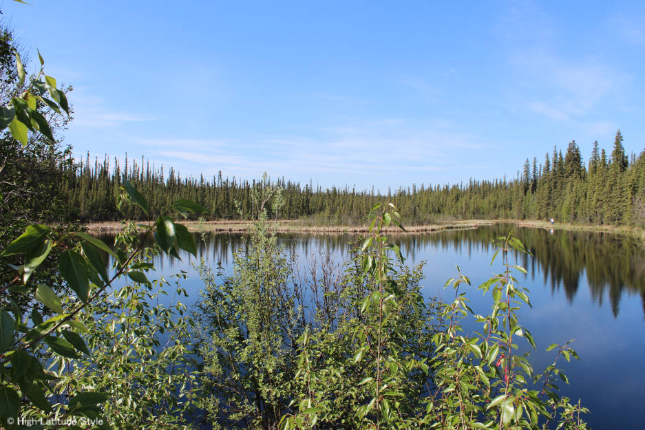 Alaska landscape of the taiga underlain by permafrost