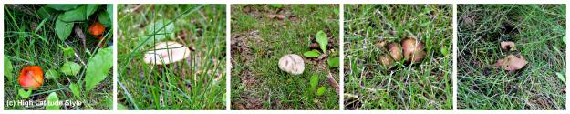 #FocusAlaska #travel various mushrooms that grow in Alaska