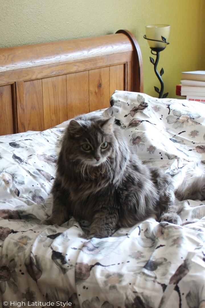 cat sitting on a bed