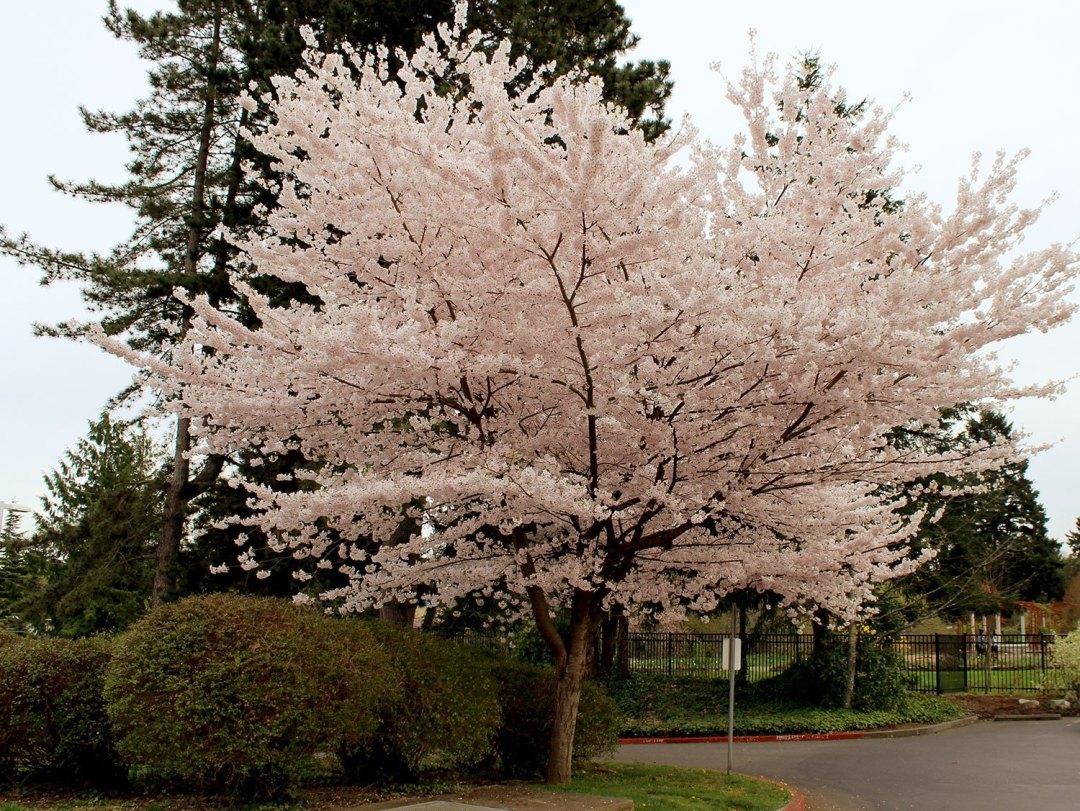Our History | Highline SeaTac Botanical Garden