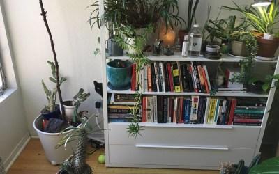 Las plantas de interiores no tienen la capacidad de limpiar el aire de nuestras casas