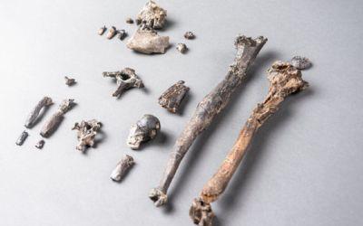 Fósiles del primer simio erguido revelan cómo pudieron caminar en dos patas los primates