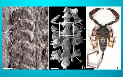 El 'Cazador Progenitor': el escorpión más viejo conocido por la ciencia