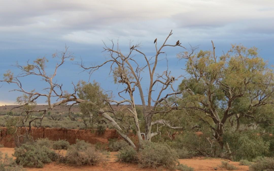 The animals of South Australia (dead and alive!)