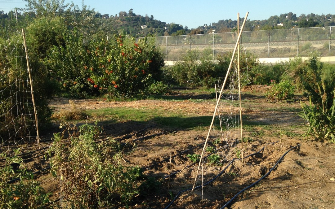 L.A. River school farm is a great way to learn about the environment