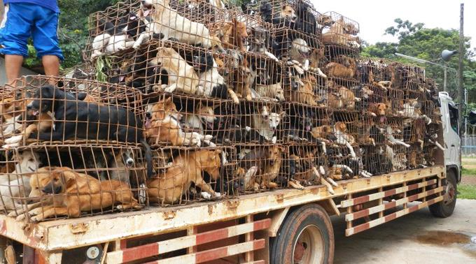 Countering the horrors of Asian dog meat trade
