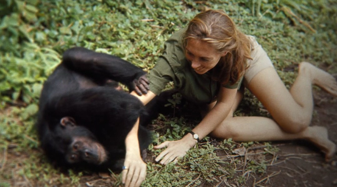 'Jane': A new look into Jane Goodall's journey with chimpanzees