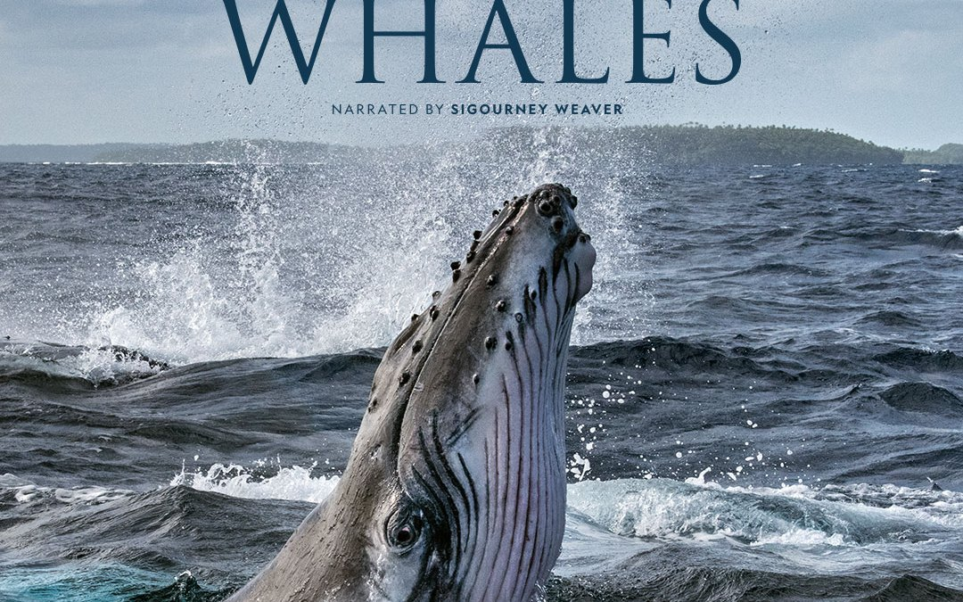 National Geographic celebrates Earth Day with four-part documentary series 'Secrets of the Whales' by photojournalist Brian Skerry