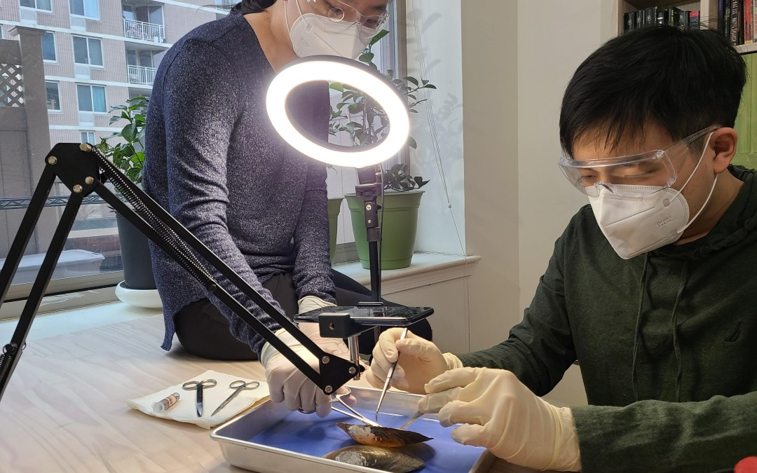 Teens Now: Meet Jaeah and Jae Kim, the hands behind Oh Worm's animal dissections