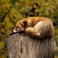【キャンプの獣害対策】野生動物を寄せ付けないのが大切!!熊・イノシシには勝てません!!