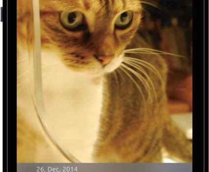 Bistro, um equipamento para alimentar gatos e monitorizar a sua saúde