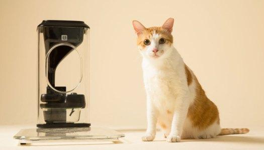 Um bistrô para o seu gato