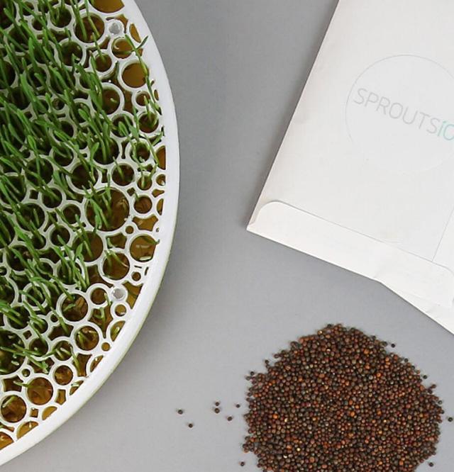 Sementes para SproutsIO, para cultivar uma horta dentro de casa