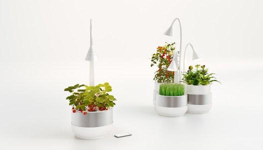 Horta Urbana: Um jardim inteligente