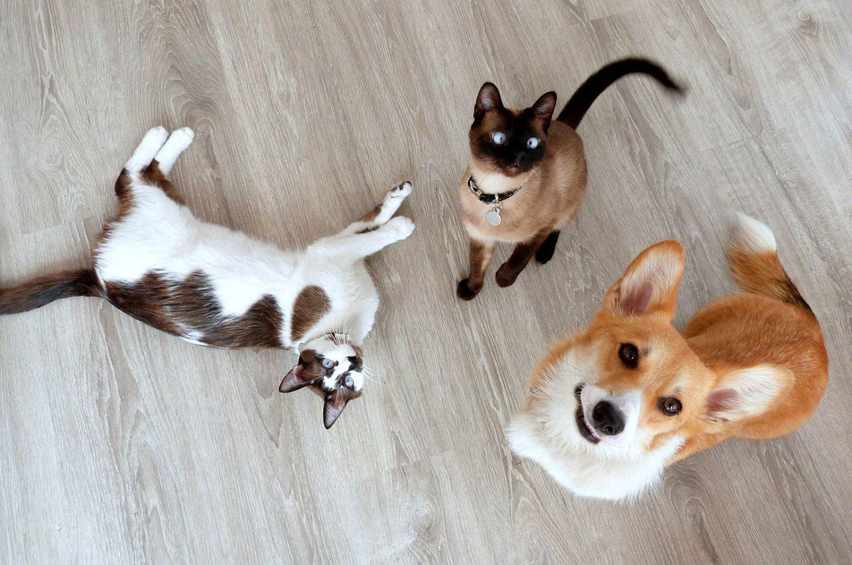 Gadgets para cães e gatos
