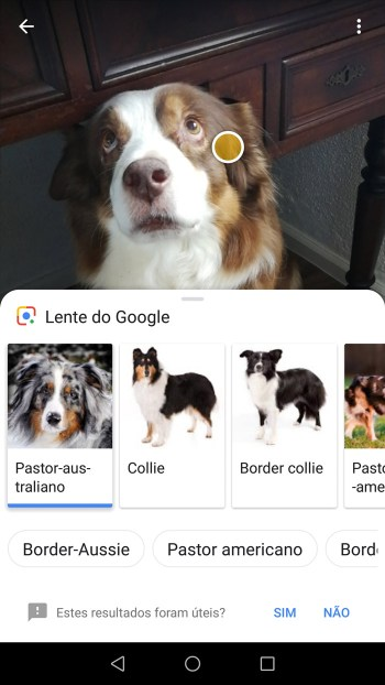 Pesquisa Google Lens Cão