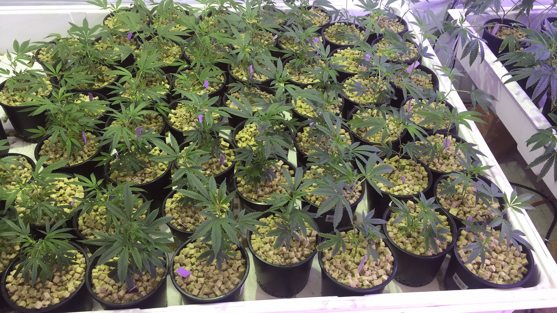 Tall Indoor Plants