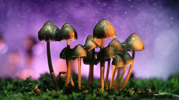 This Colorado Group Is Trying To Decriminalize Magic Mushrooms
