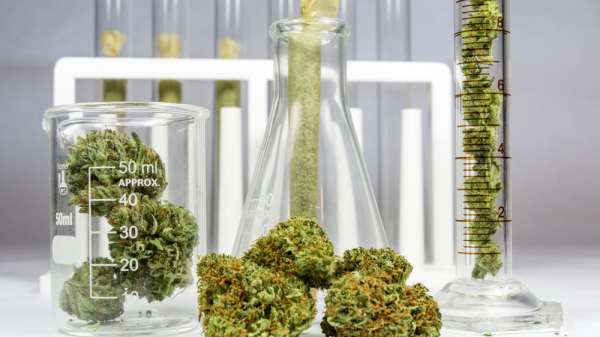 Philadelphia University Launches 'Shark Tank'-Style Competition for Weed Start-Ups
