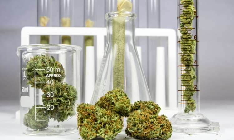 Quitting Cannabis The Worry Of Success