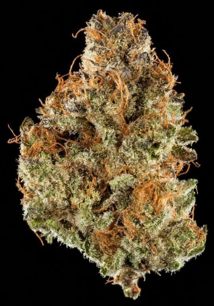 Winners of the 2018 SoCal Cannabis Cup