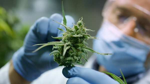 Is Medical Marijuana a Misnomer in its Current Form?