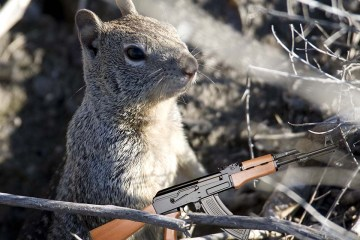 A fluffy, adorable squirrel holds a hunting rifle.