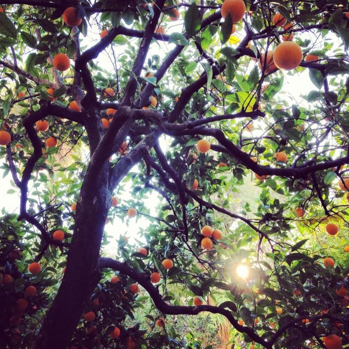 Appelsiinipuun alla Córdobassa.